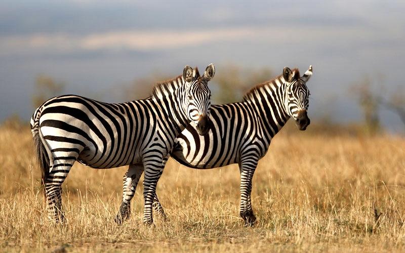 Nauji parko gyvūnai 2021 sezone